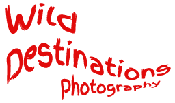 Wild Destinations Photography - Nature and Wildlife Photography Tours and Workshops